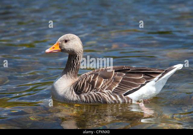 Clearwater lake stock photos clearwater lake stock images alamy