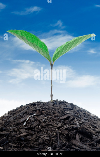 Growing Plant - Stock Image