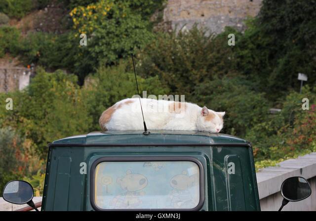 cute funny poetic picture of cat sleeping on piaggio apecar, Tivoli, Italy, photoarkive - Stock Image