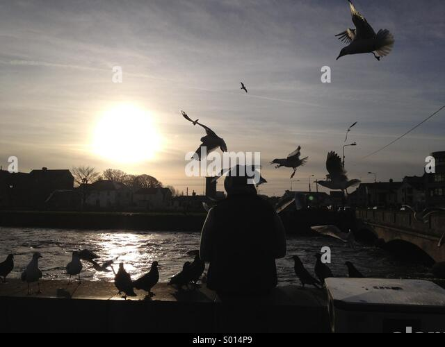 Feeding the seagulls at the Spanish Arch, Galway, Ireland. - Stock Image