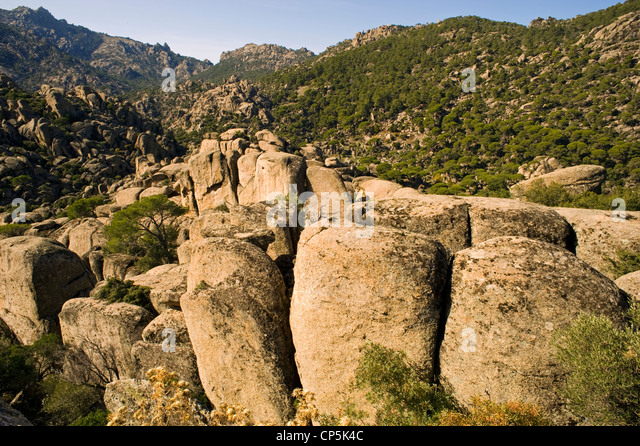Rocky landscape and stone pine forest in Besparmak Mountains Turkey - Stock Image