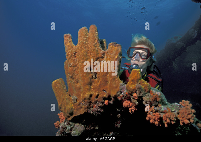 Aruba woman diver with sponges underwater Antilla - Stock Image
