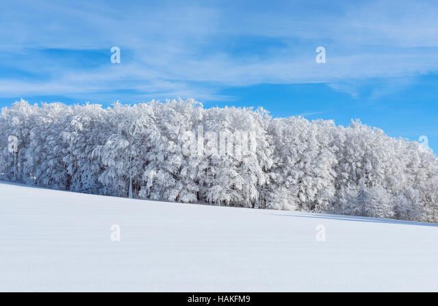Snow Covered Hardwood Forest in Winter, Schauinsland, Black Forest, Freiburg im Breisgau, Baden-Wurttemberg, Germany - Stock Image