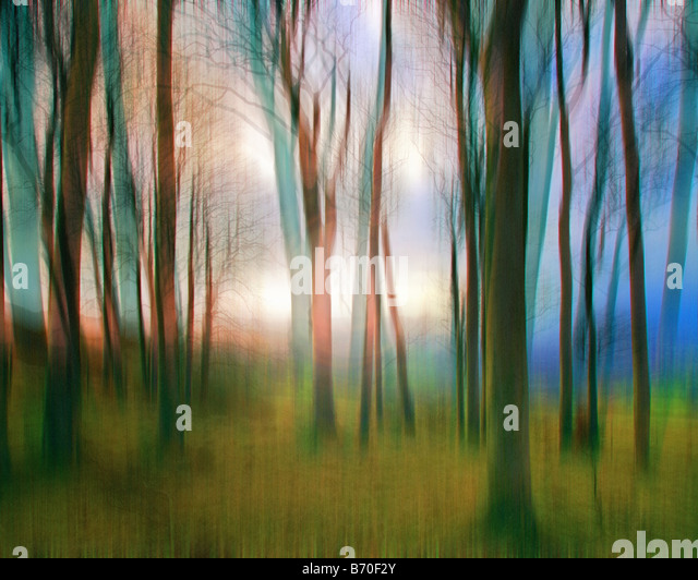 DIGITAL ART: Magic Woods - Stock Image