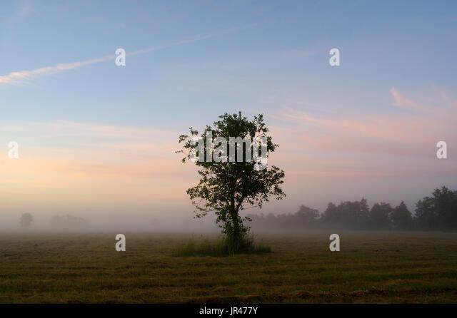 Early Morning Landscape of Matsalu National Park. Estonia 27th July 2017 - Stock Image