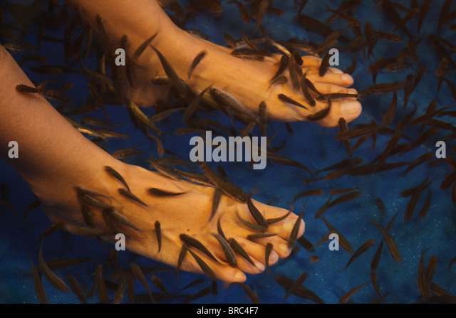 Cyprinion stock photos cyprinion stock images alamy for Fish eating dead skin spa