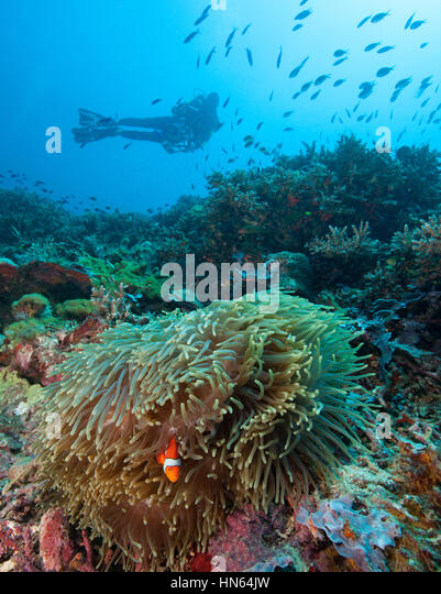 Lush coral reef in the Philippines. - Stock-Bilder