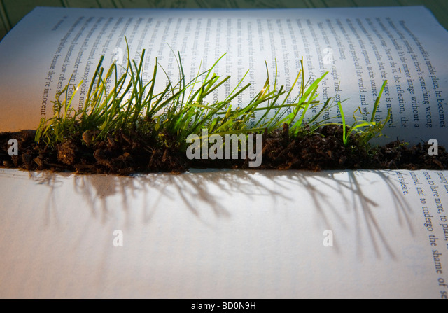 Grass sprouting from interior of book - Stock Image
