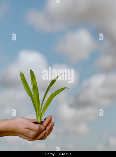 Hands holding soil and plant against a sky backdrop - Stock Image