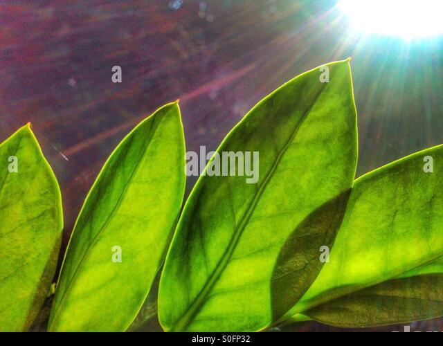Leave in the sun. - Stock-Bilder