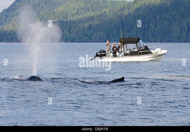 Fishermen watching humpback whales in Quatsino Sound, Port Alice, Vancouver Island, British Columbia, Canada, North - Stock Image