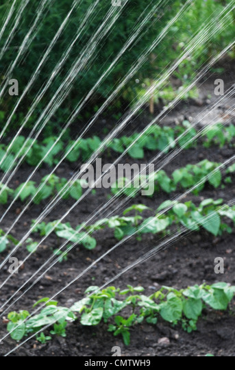 Close-up of water spray in farm - Stock Image