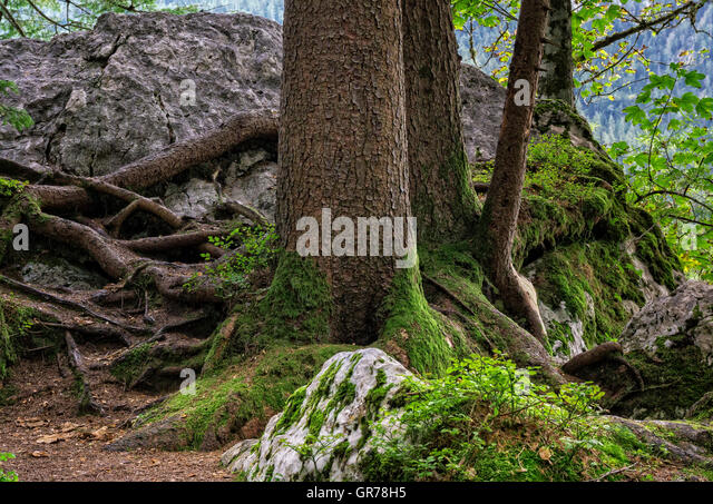 Man Cave Lillington Nc : Tree roots and boulders stock photos