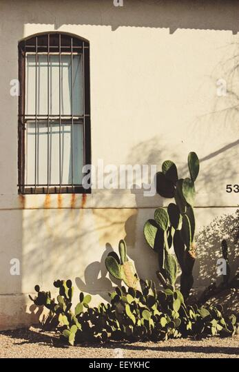 Close up of building with iron work across window with cactus growing outdoors in sunlight - Stock-Bilder