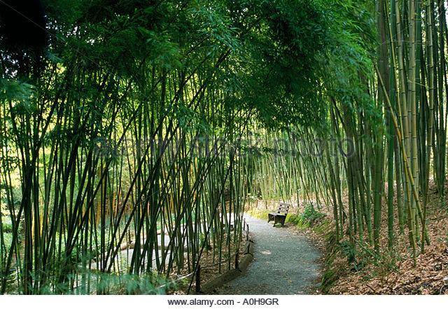 Hakone Bamboo Garden Stock Photos Hakone Bamboo Garden