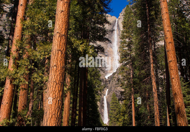 Yosemite falls and redwoods - Stock Image