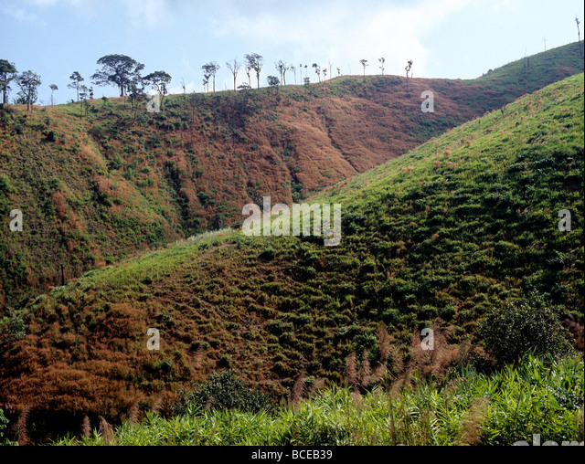 2485 After deforestation near Tak Western Thailand - Stock Image