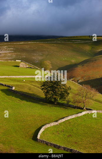 stone walls and barns nr Kettlewell, Wharfedale, Yorkshire Dales National Park, England, UK - Stock Image