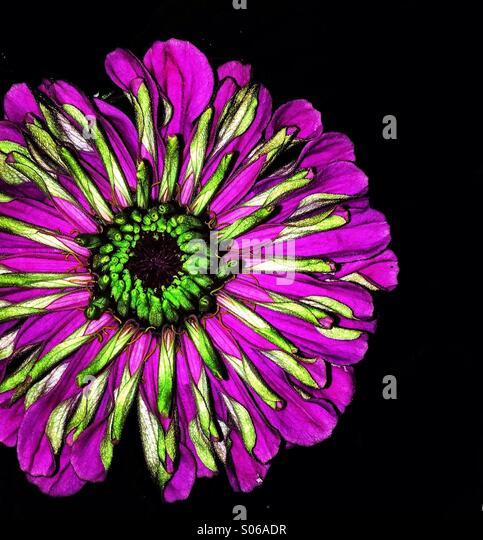 Vibrant flower - Stock Image