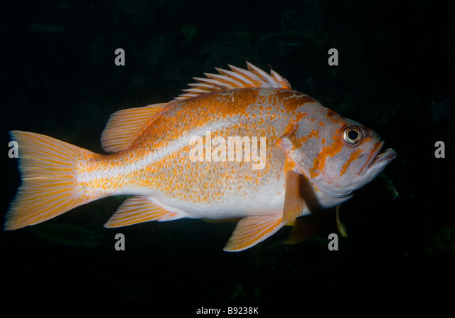 California department of fish and autos weblog for Ca game and fish