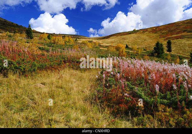mountain meadow autumn above - photo #10