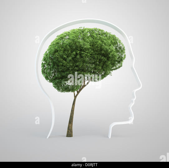 Brain tree - human head - Stock Image