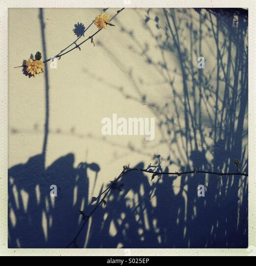 Afternoon Shadows in early Spring. - Stock Image
