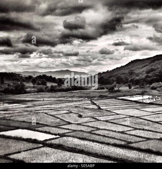 Rice fields Thailand - Stock Image