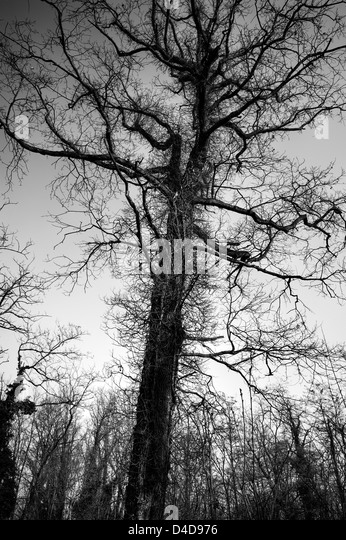 Hairy tree - Stock Image