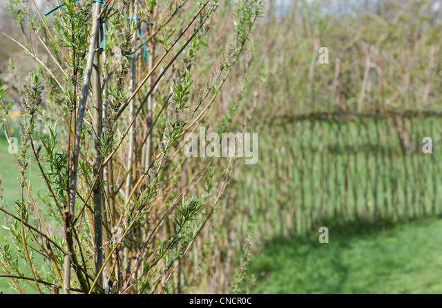 Willow Fence Stock Photos Willow Fence Stock Images Alamy