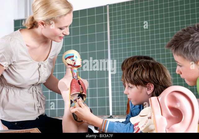 teacher demonstrating model of human body to three pupils - Stock Image