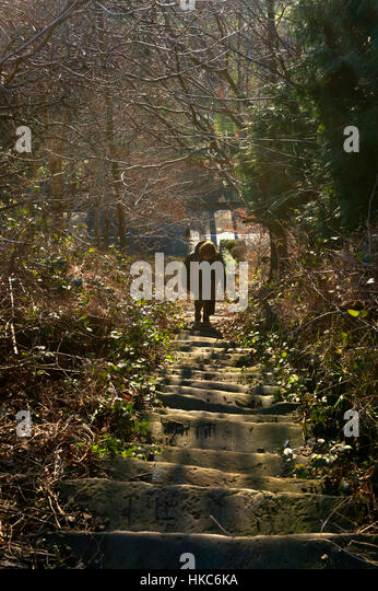 Woman climbing stone steps in the woods, Halifax, West Yorkshire - Stock Image