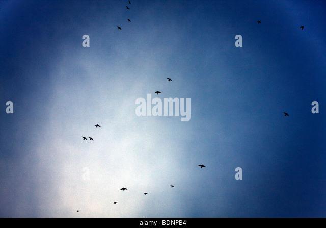 Birds flying in the evening sky, Colonia del Sacramento, Uruguay. - Stock Image