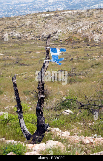 Eco catastrophe-lonely burned tree with a piece of the greek flag, after human- caused forest fire in the mountain - Stock Image