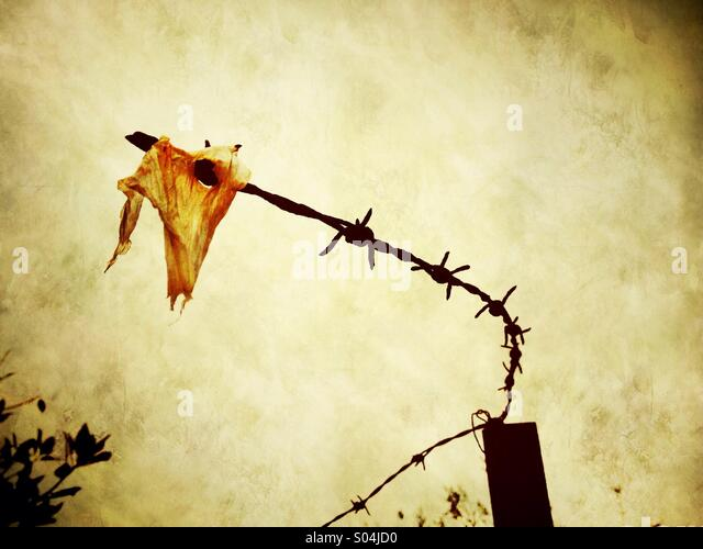 Scrap of plastic bag caught on barbed wire - Stock-Bilder