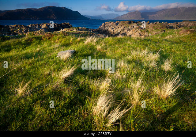 Green grassy fields at Runde island, Atlantic west coast, Møre og Romsdal, Norway. - Stock-Bilder