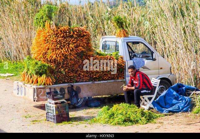 A roadsice carrot vendor in Tipaza Province, Algeria. - Stock Image