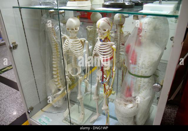 China Beijing Wangfujing Xinhua Bookstore shopping sale human skeleton model - Stock Image
