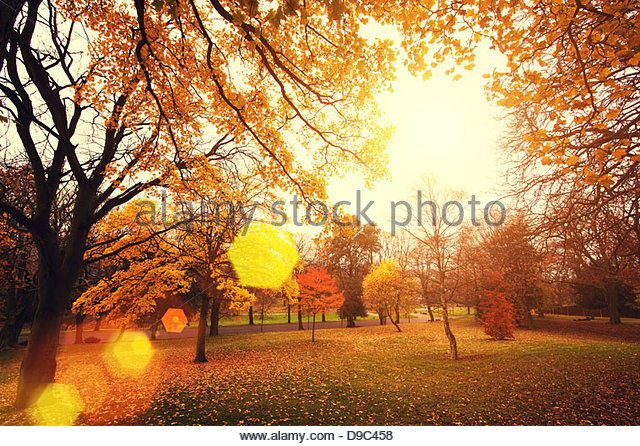 autumn glow - Stock Image