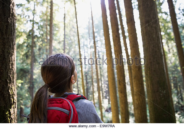 Girl looking up at tall trees in woods - Stock Image