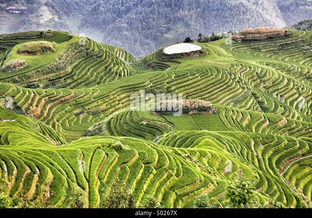 Longsheng Rice Terrace, China - Stock Image