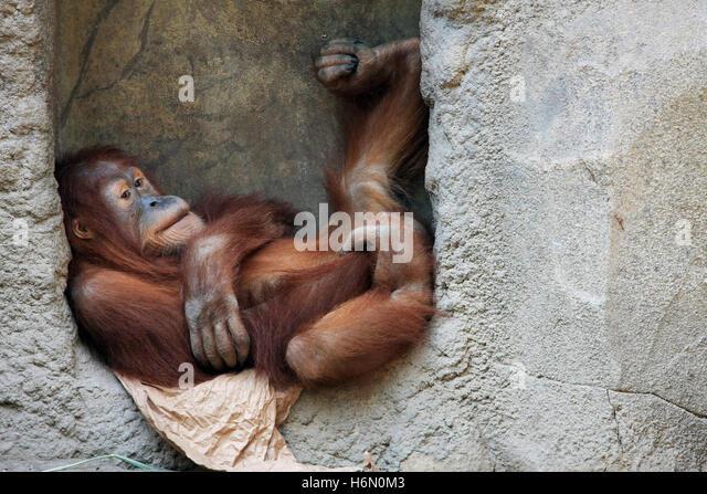 mammals - Stock-Bilder