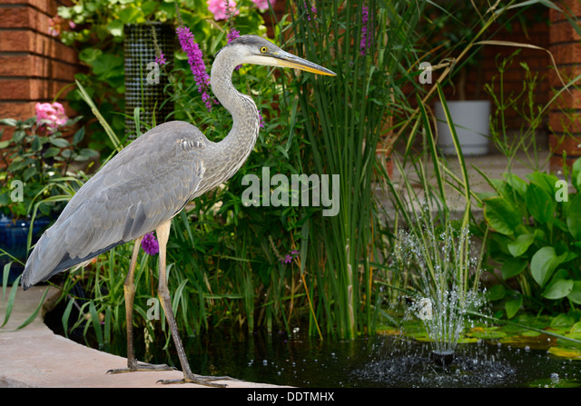 Decorative fish stock photos decorative fish stock for Decorative pond fish
