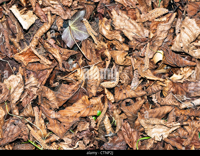 Dead leaves in garden - France. - Stock Image