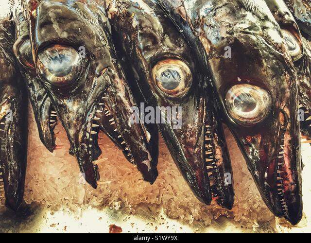 Black scabbardfish, Aphanopus carbo, on ice at a fish stall at the Mercado dos Lavradores, Funchal, Madeira, Portugal - Stock Image