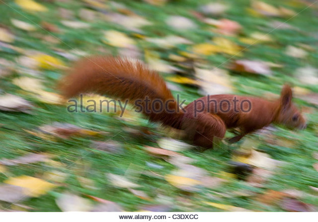 A squirrel - Stock Image