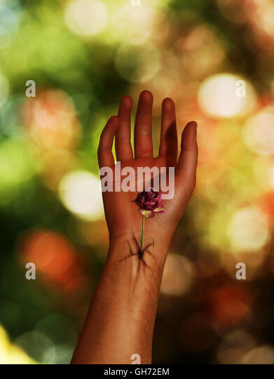 Flower in arm - Stock Image