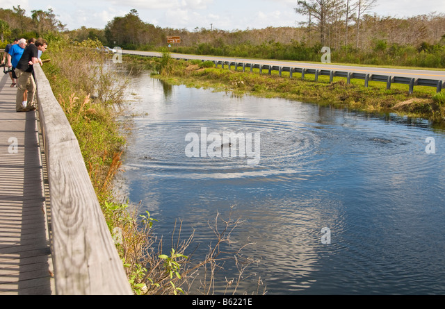 Boardwalk by canal at the Big Cypress National Preserve Visitor Center Everglades US 41 Tamiami Trail Florida - Stock Image