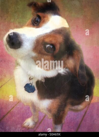Small Dog Portrait - Stock Image