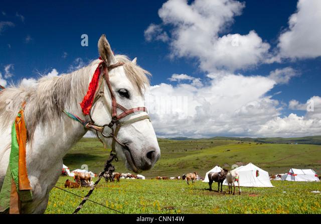 White horse festival secret mountain Tagong area western China Tibet Asia - Stock-Bilder